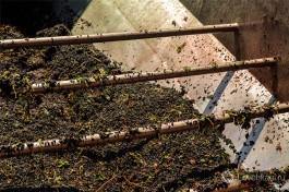 Виноград в производственном процессе.