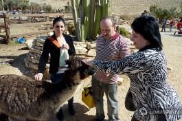 Мирьям с мамой и папой Андрея на ферме альпак в Мицпе Рамон.