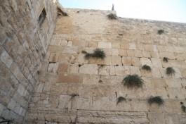 Стена Плача - самое часто ассоциируемое с евреями место. Гиюр