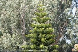 Растительность подворья Марии Магдалины очень разнообразна.