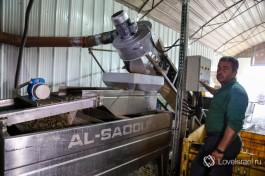 Производство оливкового масла.