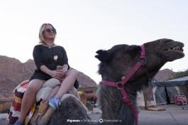 Туристы катаются на верблюдах.