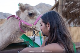 Работник верблюжьего ранчо ухаживает за животными.