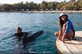 Игры дельфинов с тренерами.