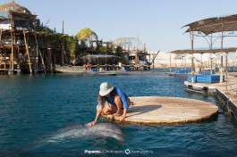 Между человеком и дельфином образуется дружеская связь.