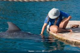 Дельфины на Рифе.