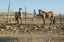 Лошади на ферме. И на них тоже можно покататься )
