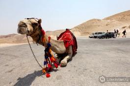 Спуститься к монастырю можно и на верблюде или на осле, в сопровождении настоящего бедуина. Главное - не обращать внимания на блох )