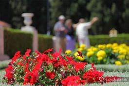 Бахайские сады. Очень много самых разнообразных цветов )