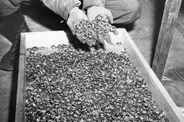Холокост. Обручальные кольца погибших в концлагерях евреев.