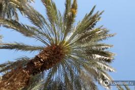 Погода благоприятствует пальмовым плантациям:)