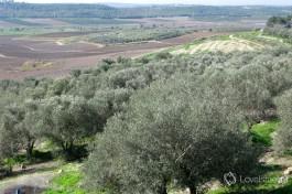 Израиль - это рукотворные поля