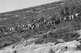 Сейчас нам трудно поверить, но именно так были были посажены леса на тогда еще голых холмах Иерусалима (около 1930)