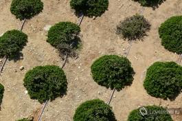 Подойдя ближе к любому растению на улице мы увидим сколько труда затрачено, чтобы сделать Израиль зеленым!