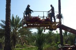 Специальный подъемник, с помощью которого собираются спелые плоды с пальм. Способен поднять сборщиков урожая на высоту до 20 метров. Вид оттуда восхитительный )