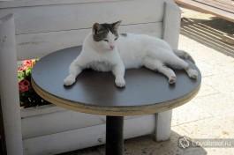 Довольный котяра. В Израиле очень любят кошек. И кошки очень любят Израиль )