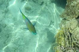 Подводный мир Красного моря. Дайвинг в Эйлате.
