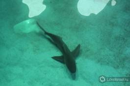 Акула. Маленькая, не переживайте, она находится в аквариуме Обсерватории :)