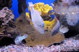 Замечательный подводный мир Эйлата.
