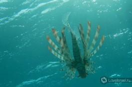 Живописный подводный мир Эйлата.