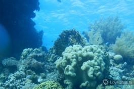 Красочный подводный мир израильского побережья Красного моря!