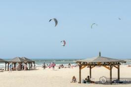 А вот под такими деревянными грибами можно спрятаться от солнца на Тель-Авивских пляжах.