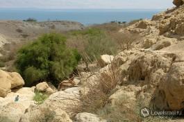 Вид на Мертвое море с заповедника Эйн Геди. Он стоит того, чтобы подняться вверх по горе.