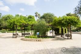 Скверик в парке Рамат ха-Надив, в центре - пруд с фонтанчиком и лилиями.