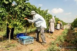 Все рабочие хорошо защищены от не всегда ласкового израильского солнца.