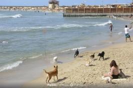 Собачий пляж в Тель-Авиве.