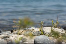 Вода озера Кинерет.