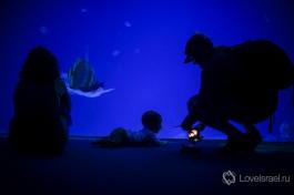 Подводная обсерватория в Эйлате.
