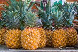 Сезон ананасов в Израиле открыт!