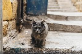 Животные Иерусалима :)